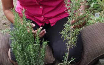 Helena-Reet: Tänään kirjoitan rohdoskasvien magiasta!