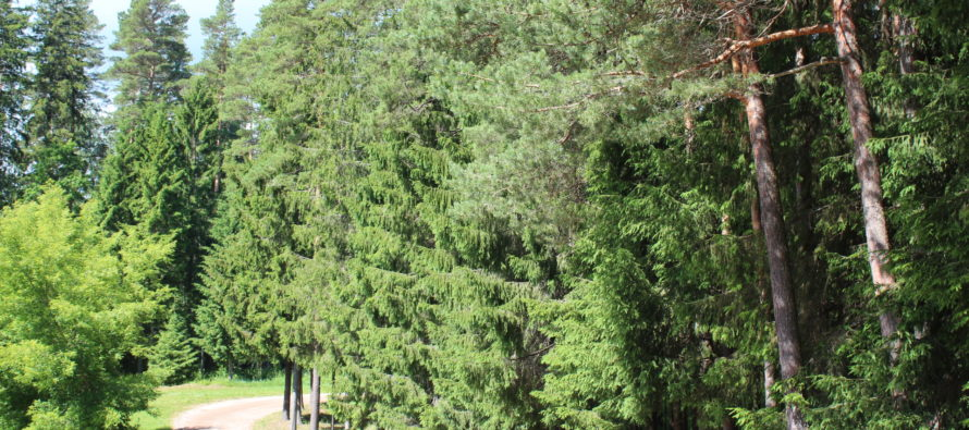 Helena-Reet: Loma (vol4) – Võrtsjärven rannalla, Paistun hautausmaalla ja Intsun kylässä Männikun Metsatilalla