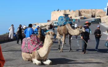 Palasia Marokosta… Vähän kamelista