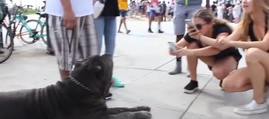 USKOMATTOMAN suuria koiria, joita todella on olemassa