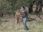Mies pelastaa koiransa kengurulta, mutta SITTEN TEKEE jotain rumaa